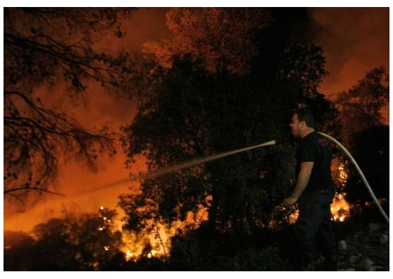 """israel fire carmel forest"""