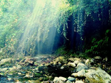 Sufi Poetry: Lessons In Nature & Leadership