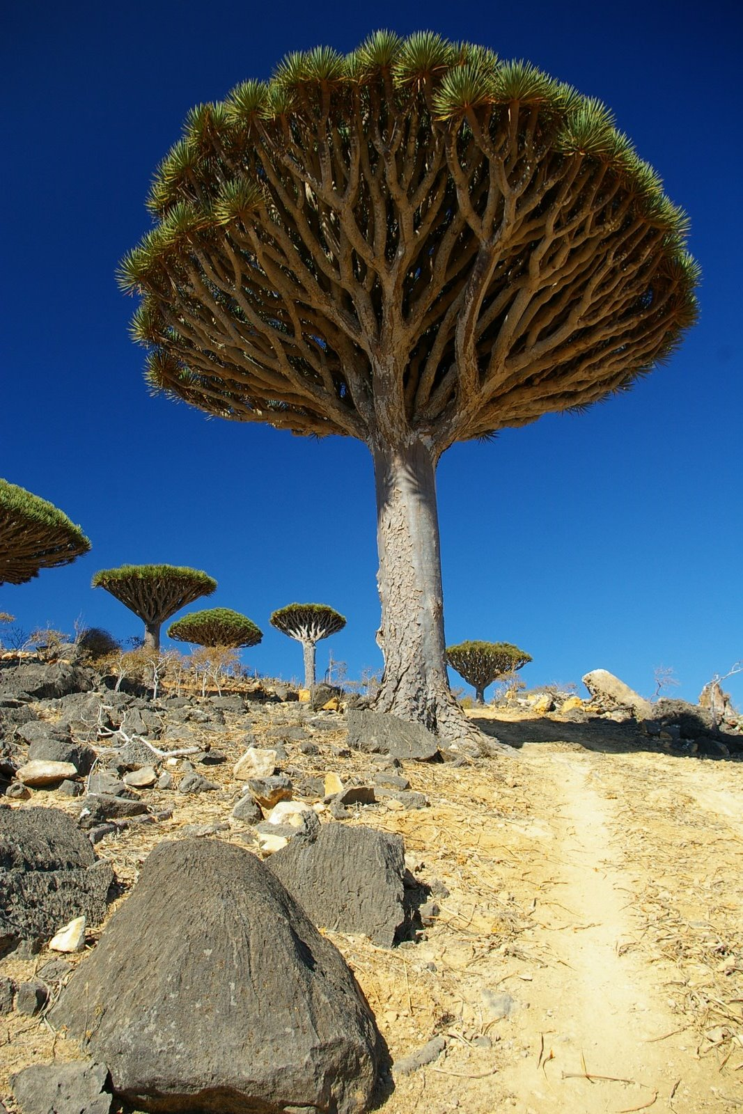 Biodiversity Under Threat At Yemeni 'Alien-Island'