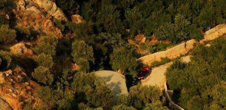Ajloun-Forest-trees-aerial-view.jpg