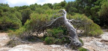Trees That Don't Stand a Chance Against Climate Change