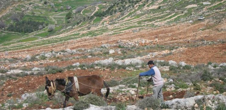 west-bank-sustainable-farm.jpg