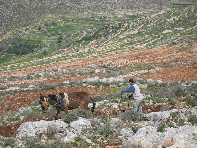 Canaan Fair Trade Creates Sustainable Community of Palestinian Farmers