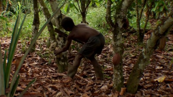 image-child-labor chocolate africa
