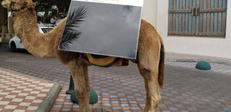 camel-with-solar-panel-photo.jpg