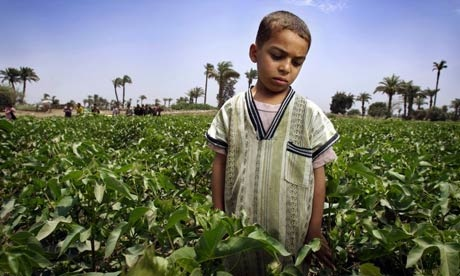 child labor cotton