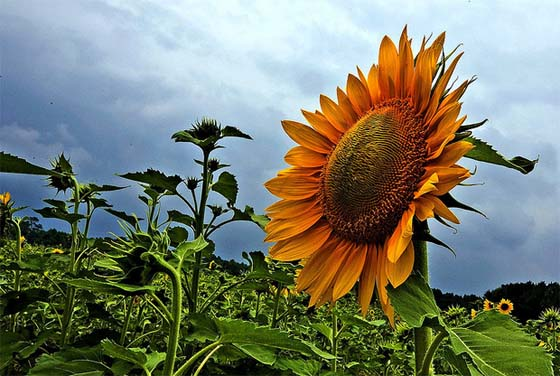 Sunflower Sustainable Investments
