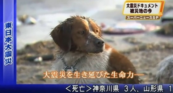 dog japan nuclear meltdown