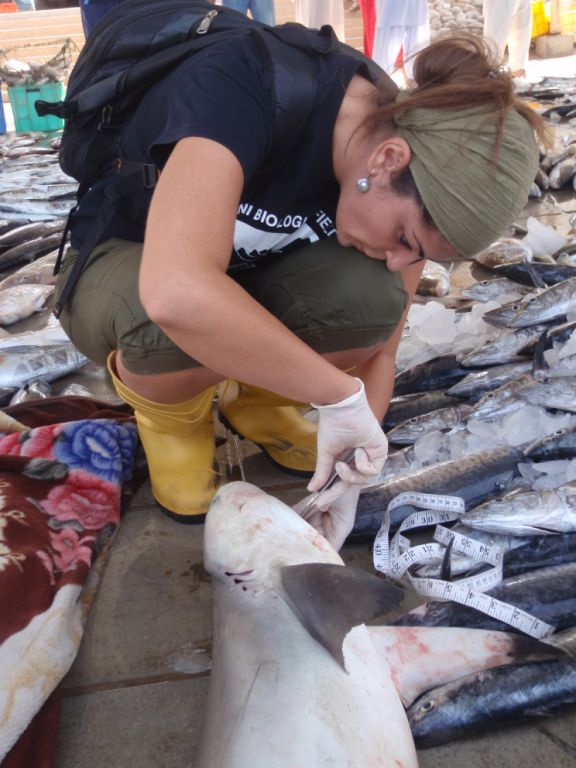 A Day In the Life of A Marine Scientist: Interview with Rima Jabado