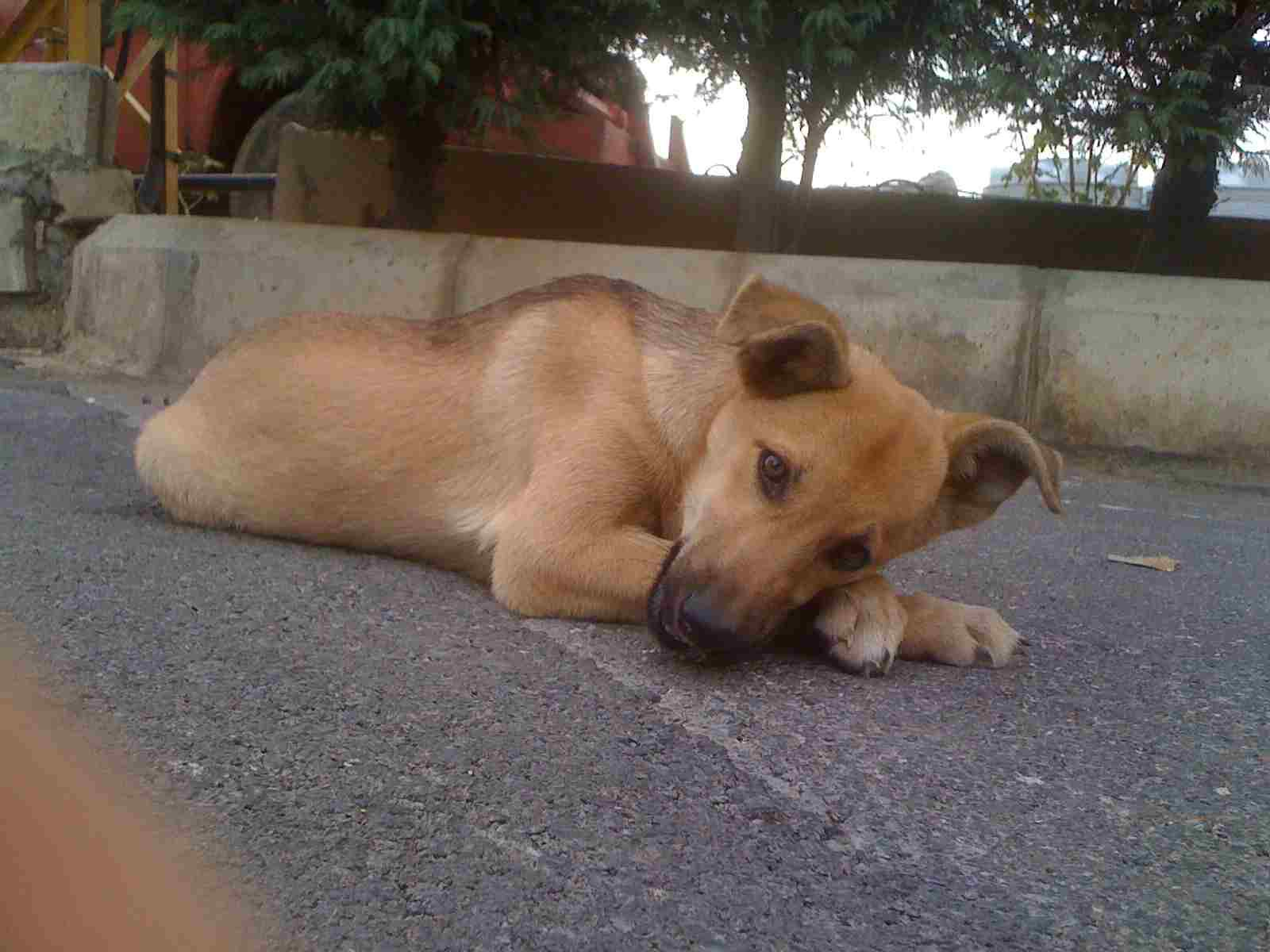 Stray Dogs Shot Dead in Lebanon