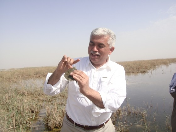 Azzam Alwash, marsh iraq