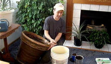 Make Compost In Your Living Room