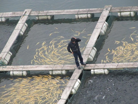Fish farming isn t so evil after all green prophet for What is fish farming