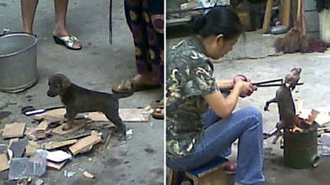 Image result for Cruelty in China