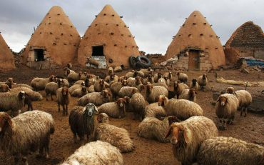 Syria's Beehive-Shaped Green Architecture