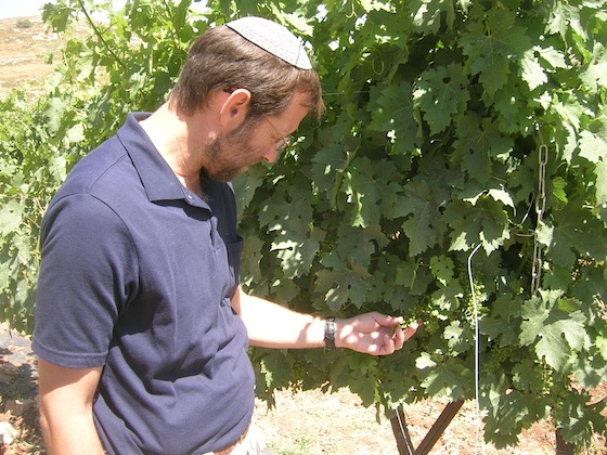 Israeli Farmers Get Useful Data on Microclimates – for Now