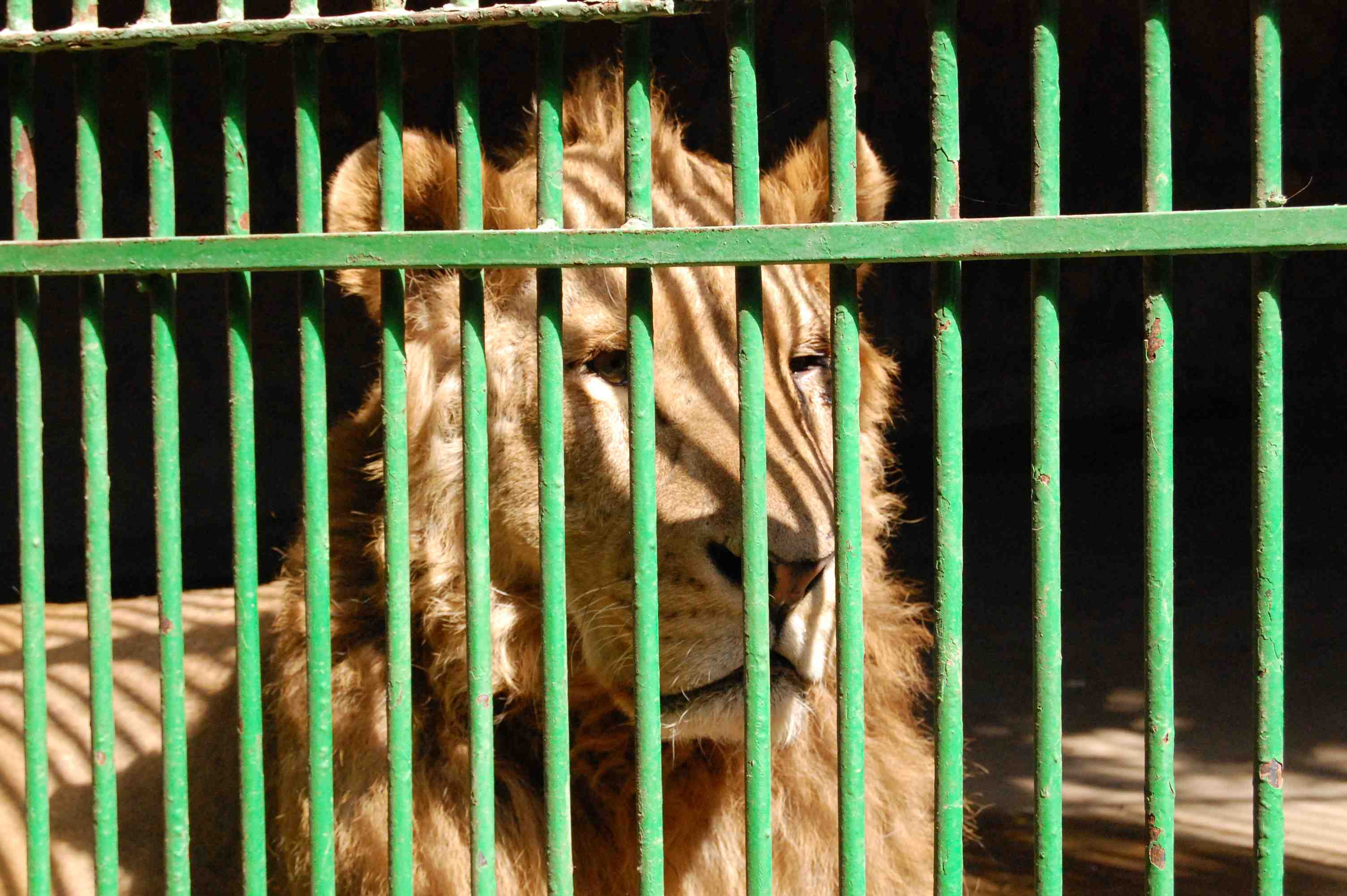 Corruption is Alive and Well at Egyptian Zoo