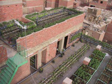 vertical farming, urban agriculture, Cairo, permaculture