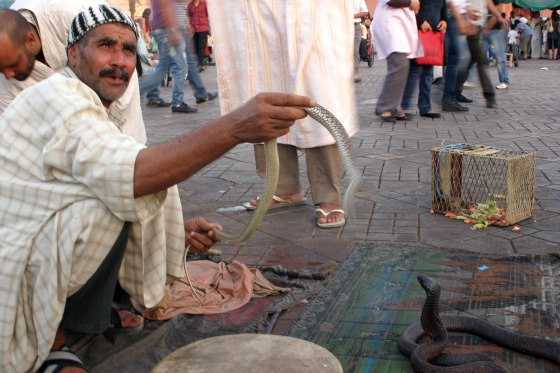 wildlife conservation, animal rights, Morocco, snake charming, marrakech