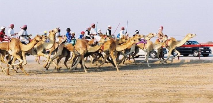 Camel-Racing-002-in-Qatar.jpg