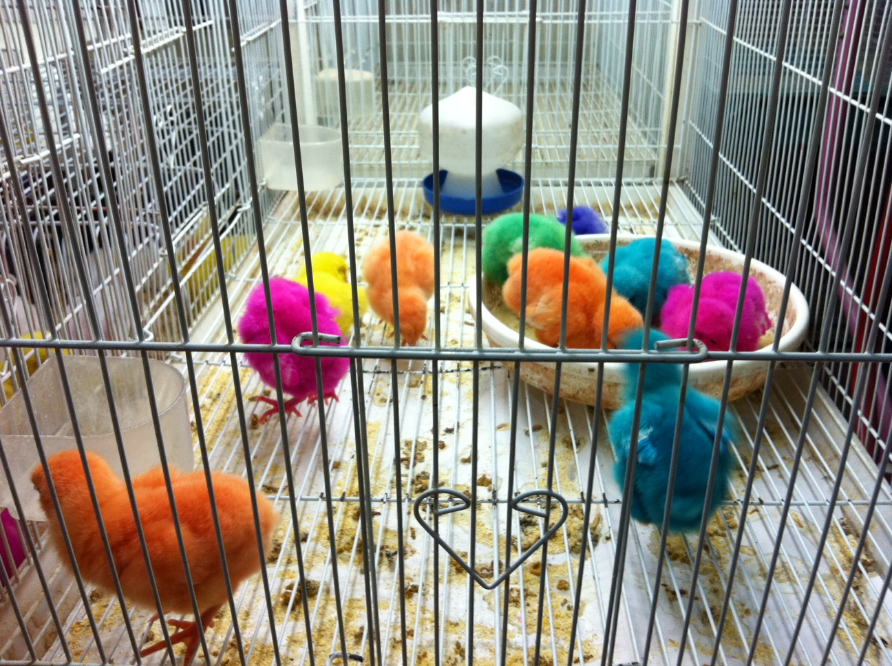 Do Fluorescent Chicks and Bunnies in Qatar Alienate Kids From Nature?