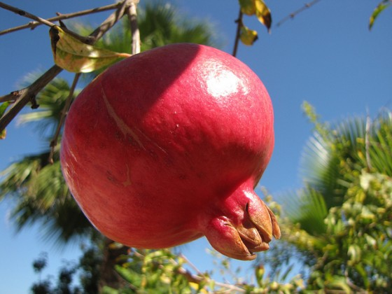 pomegranate middle east aphrodisiac