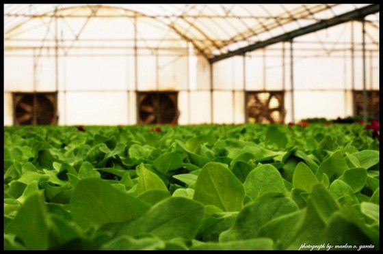 qatar organic farms