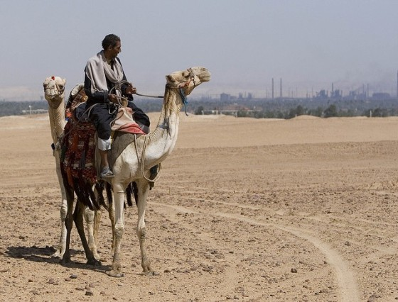 middle east camel climate change
