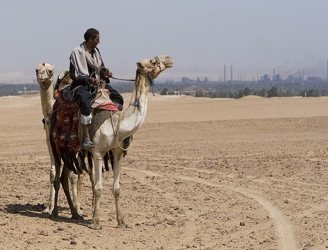 80% of Middle East and Africa Concerned About Climate Change