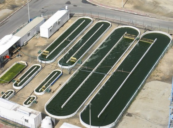 seambiotic algae ponds