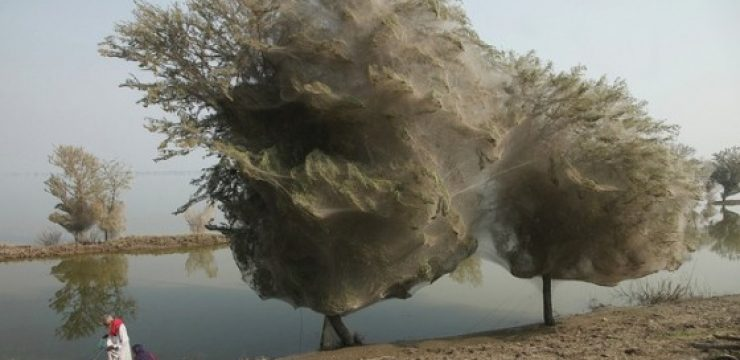 pakistan-flood-spiders.jpg