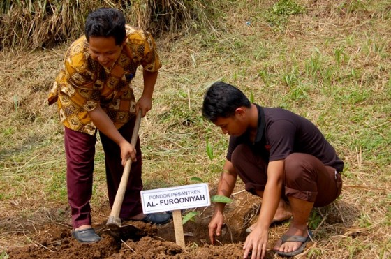 trees4life british muslims plant trees palestine indonesia carbon