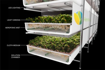 agriculture, middle east food shortages, groassis, aerofarms, liveinslums, water shortages, farming, soilless farming, vertical farming