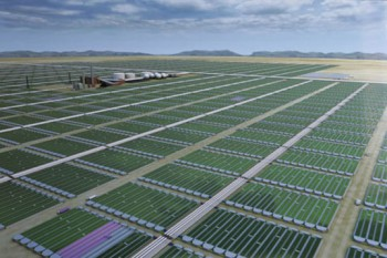 algae biofuel farms