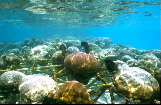 water issues, pollution, climate change, coral reef, red sea, gulf, electricity, nature conservation, coral