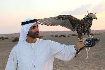 The Green Sheikh, Falconry, travel, nature, environmental art, photography, The Middle East,