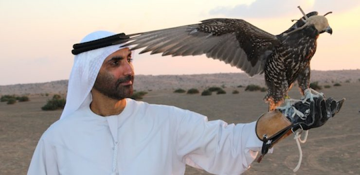 the-green-sheikh-with-falcon.jpg