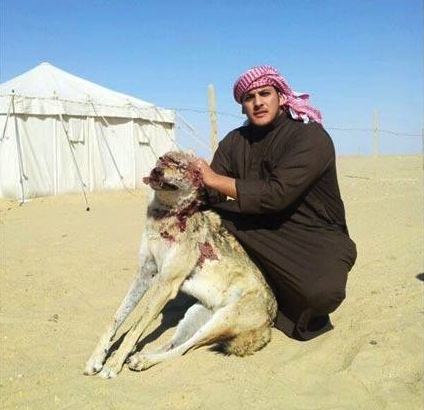 wildlife conservation, animal conservation, egypt, kuwait, wildlife, illegal wildlife trafficking, united arab emirates