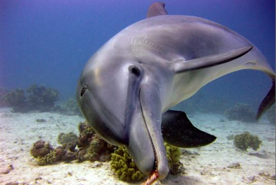 dolphins, animal rights, persian gulf, arabian gulf, oil, marine mammals