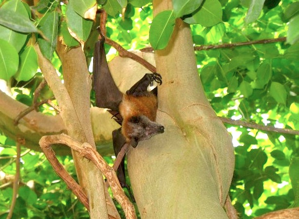 Thousands of Endangered Fruit Bats Were Gunned Down in Lebanon
