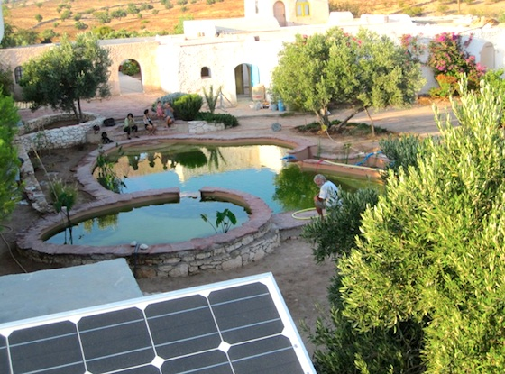 eco-pool, natural pool, ecological pool, chemicals, pollution, constructed wetlands, green design, sustainable design, eco design
