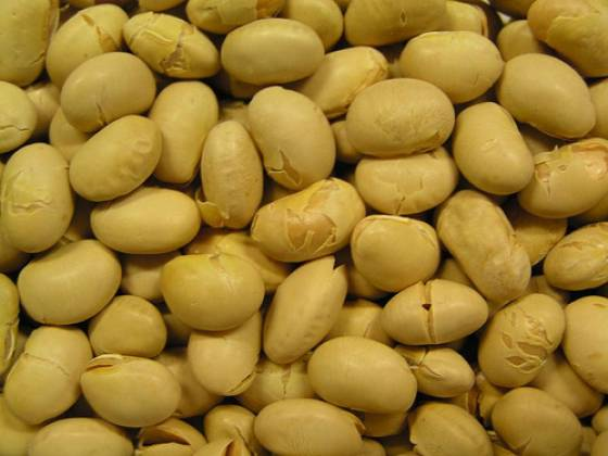 image-soybeans genetically modified
