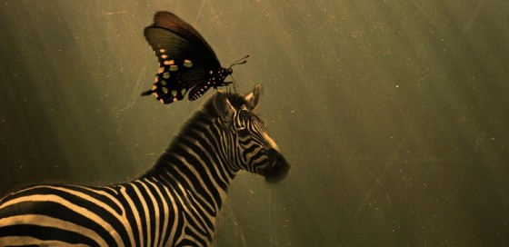 zebra and butterfly, biofuel
