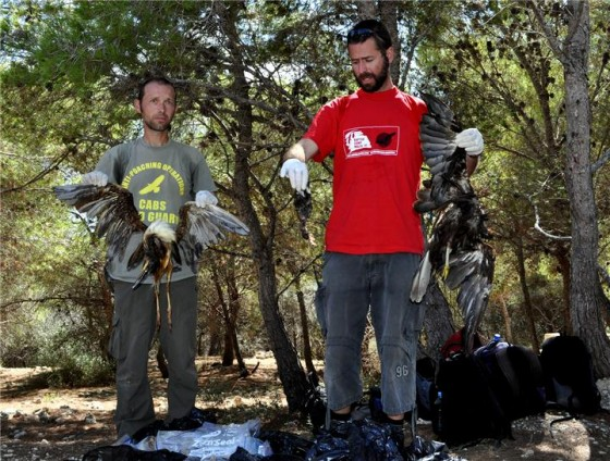 BirdLife Malta, Maltese Hunters, wildlife Conservation, animal conservation, birds, Egypt, hunting, Lake Nasser