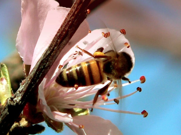 bees, honey, agriculture, colony collapse disorder, farming, Lebanon, winter, extreme weather