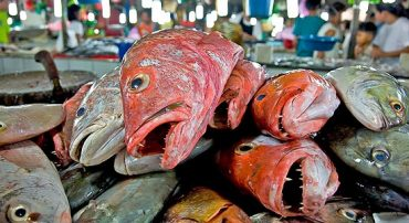 Dubai Finally Gets Serious About Overfishing