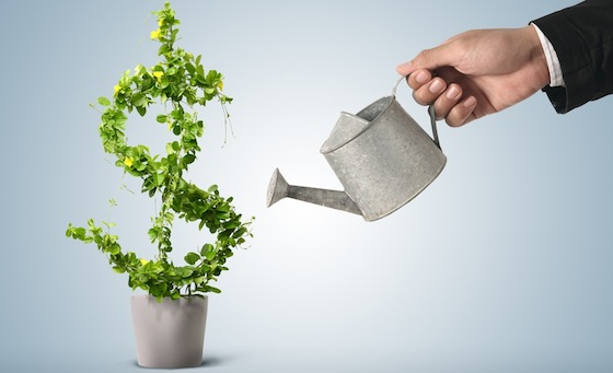 green money plant watering can