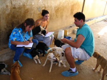 Owners of Fancy Lebanese Villas Sue to Close Down BETA Animal Shelter