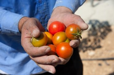 Thimar Farm in Palestinian Territory Grows Food and Dignity