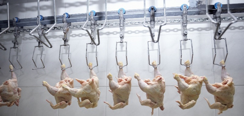 Arsenic-Fed Chickens – Watch Out!